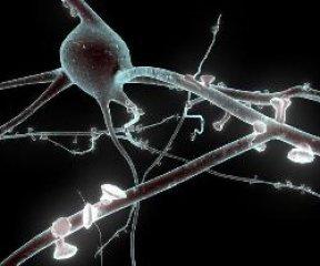 Sinapsis cerebro