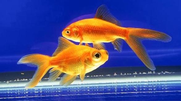 Twogoldfish_visualphotos.com
