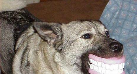 Whohastheteeth